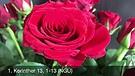 Vlog 173- Die Liebe, größer als alle Gaben (Das Hohelied der Liebe)